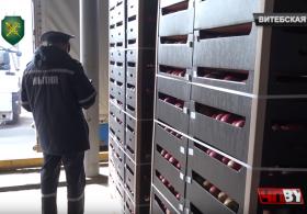 Около 100 тонн фруктов незаконно пытались вывезти из Беларуси для реализации на территории России