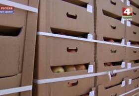 Незаконное перемещение более 40 тонн яблок пресекли могилевские таможенники